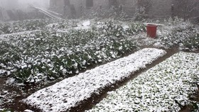 Cattle & vegetable crops die in cold weather