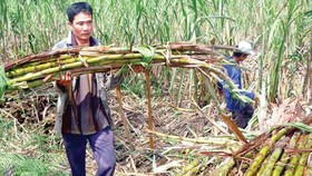 Some sugar plants close down due to lack of materials