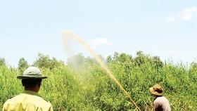 ĐBSCL nỗ lực phòng chống cháy rừng