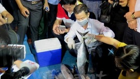 Ministries step up efforts to assist fishermen after massive fish deaths