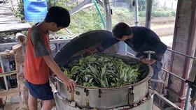 The healing power of Viet Nam's farmers
