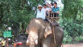 Vietnam launches elephant preservation week