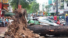 Trees uprooted after heavy rain & powerful wind