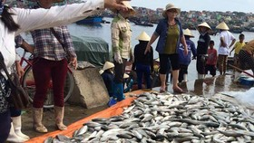 Thanh Hoa province reports large scale fish deaths to Prime Minister