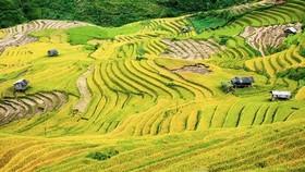 Cultural week of Mu Cang Chai terraced field opens