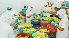 Vietnam re-structures agricultural  products for export