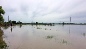 Binh Thuan damages VND 37bln due to rain & flood