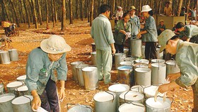 Rubber latex prices move up in southern Vietnam