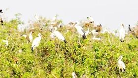 Vùng bảo tồn đất ngập nước ở ĐBSCL bị đe dọa nghiêm trọng