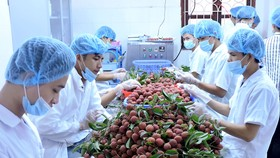 Vegetable, fruit exceeds rice export for first time