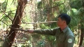 Nhân viên bảo vệ rừng thiệt mạng trên đường tuần tra