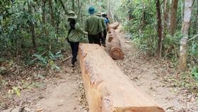 Kỷ luật 7 nhân viên bảo vệ rừng bịa chuyện lâm tặc cướp gỗ vi phạm