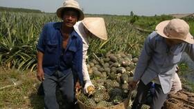 Agro-aqua-forestry import increases 21.8 percent