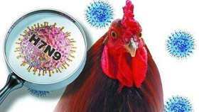Tourism Administration warns people to keep away from bird flu-infected areas