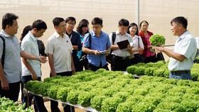 TPHCM và tỉnh Lâm Đồng tăng cường liên kết tiêu thụ nông sản