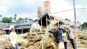 Sugar Price in Fever Again
