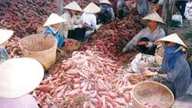China Market Keen on Vietnamese Vegetables