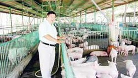 Staying Home and Getting Rich from Pig Farming