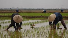 Farmers receive VND80bn