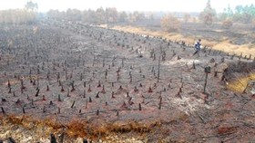 Phu Quoc forest fire