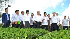 Thủ tướng thăm vườn chè cổ thụ
