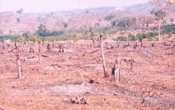 Đua nhau… phá rừng!