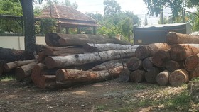 Hàng trăm khối gỗ tang vật thu giữ tại hạt kiểm lâm Cư Jút