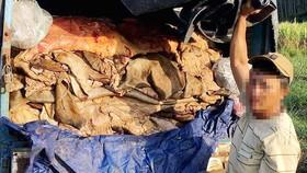 Hơn 3 tấn da bò bốc mùi hôi thối trên xe
