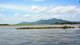 Nước lũ từ Campuchia chảy rất mạnh về vùng biên giới Tri Tôn. Ảnh: HUỲNH LỢI