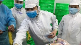 Employees stick stamps with origin and other details on poultry meat at San Ha Company in Long An. (Photo: www.nld.com.vn)