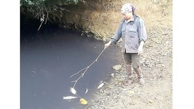 The factory releases foul-smelling black water into canals, causing mass deaths of fish. (Photo: Sggp)