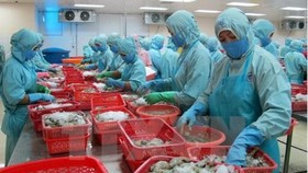 Vietnam's fishery sector achieves its export target of 8 billion USD in 2017. (Source: VNA)
