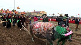 Tich Dien ploughing festival opens in Ha Nam