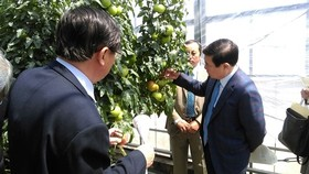 Chairman of the municipal People's Committee Nguyen Thanh Phong visits an agricultural experimental station in Aichi.  (Photo: Sggp)