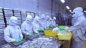 Processing shrimp for export (Source: VNA)
