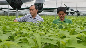 HCM City keen on developing Cu Chi district's urban agricultural model