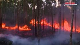 Huế, Đà Nẵng, Phú Yên liên tiếp xảy ra cháy rừng, đe doạ đường dây 500KV
