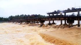 Lũ cuồn cuộn trên sông tại huyện Hoài Nhơn. Ảnh: QUANG HẢI
