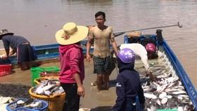 Công an tỉnh Đồng Nai vào cuộc điều tra vụ hơn 300 tấn cá bè chết