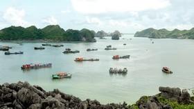 Lan Ha Bay in Cat Ba town (Source: VNA)