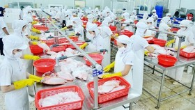 Workers make seafood to export to the US (Photo: SGGP)