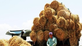 Bundles of straw is sold to traders from highlands province (Photo: SGGP)