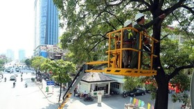 Workers of the Hanoi Green Park JSC trim branches of trees on Tran Duy Hung street in Hanoi ahead of the rainy season (Photo: VNA)