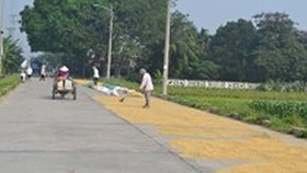 Harsh penalties against those drying rice straw in roads