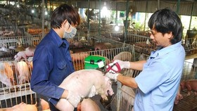 Vietnam urgently adopts preventive measures against African swine fever