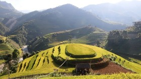 Terraced rice fields in Mu Cang Chai (Photo: VNA)