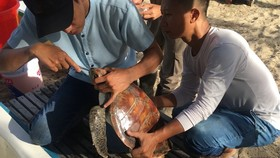 Le Chien (right) helps rescue a sea turtle on a beach in Da Nang (Photo: VNA)