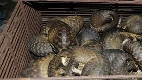 One of the pangolin cages found in the police raid. (Photo provided by local police)