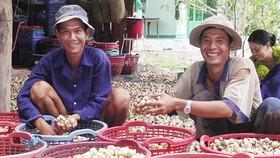 Vietnam boosts cultivation, exports of mushroom