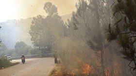 Vegetation fire occurs along Prenn Pass near Da Lat city (illustrative photo:SGGP)